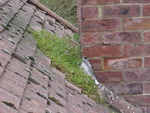Exceptional Moss Growing On Slate Roof Behind Chimney
