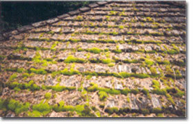 Moss Growing On Tile Roof