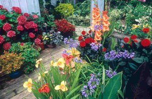 Bulb Garden - Flower Pictures - free pictures wallpaper photos