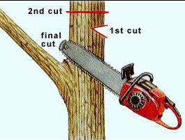 Pruning Techniques Part 2