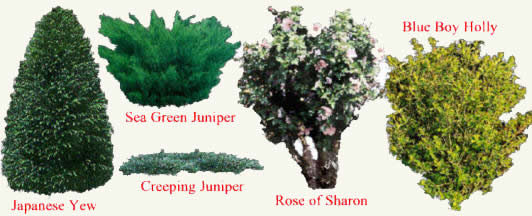 What are the Different Types of Shrubs? (with pictures)