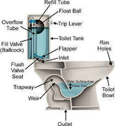 Wonderful Drawing Of A Toilet And Its Parts