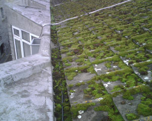 Moss on roof and in gutter