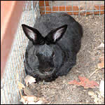 rabbit hutch - free plans, drawings and instructions